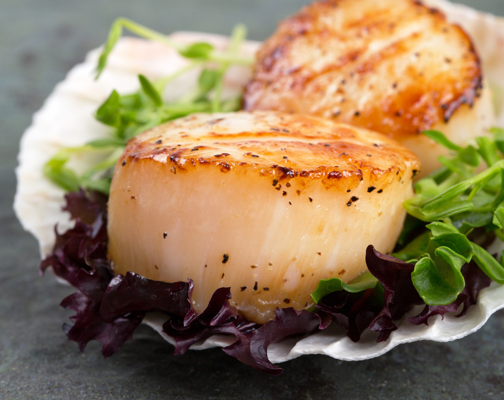 Scallops Shell-on
